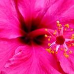 Konkurencja wśród kwiaciarni