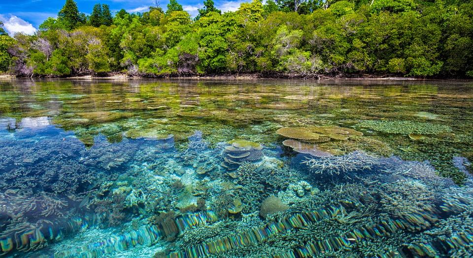 O koralowcach słów kilka