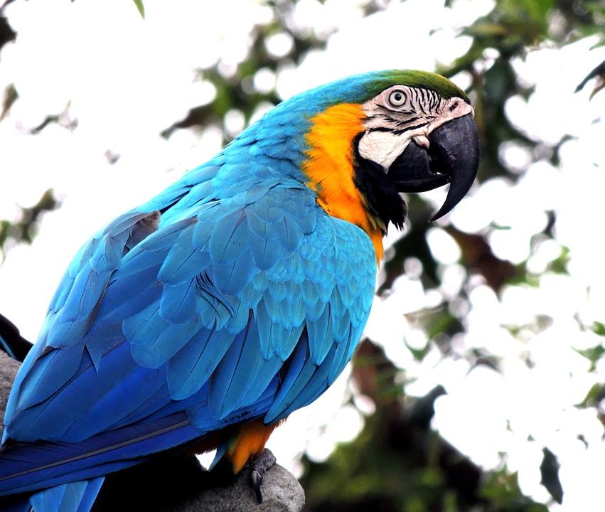 Kilka słów o papugach