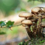 Zadziwiający świat grzybów