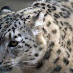 Zagrożone gatunki zwierząt