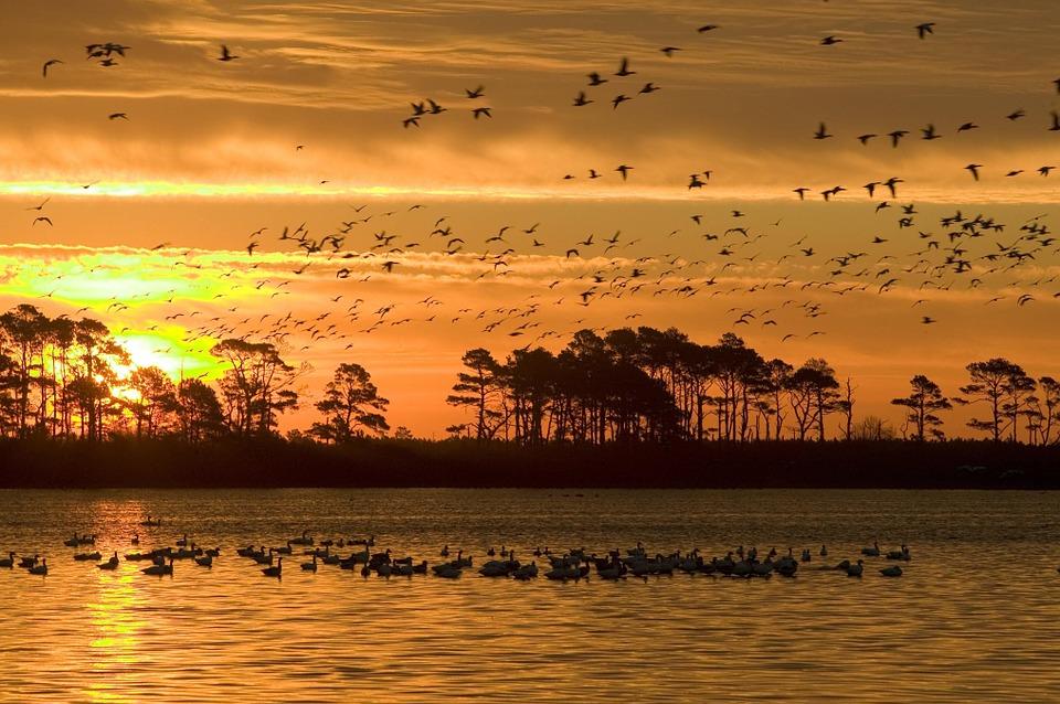 Co warto wiedzieć o ptakach morskich?