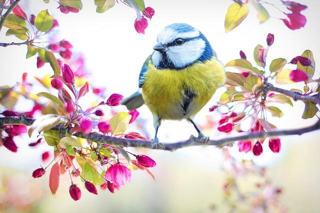 Wiosna dla alergika